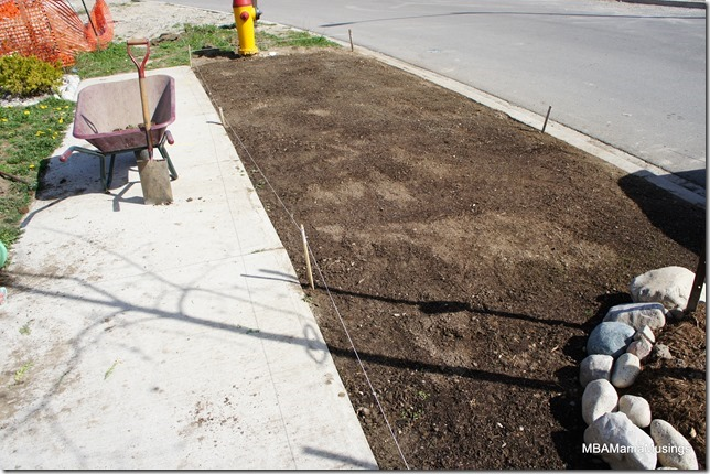 Front boulevard re-seeding