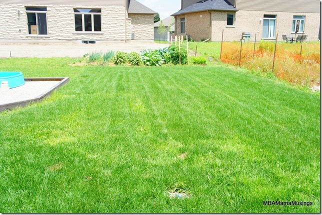 Back yard with lush green grass and vegetable garden