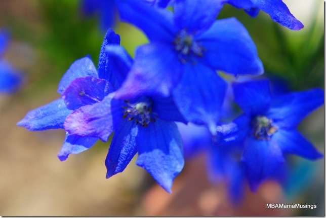 Upclose shot of a blue delphinium