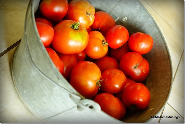 Old Tin Pail filled with red tomatoes