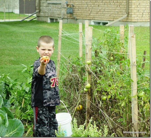 Boy holding out red tomato
