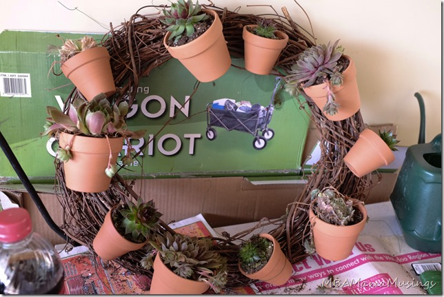 Creating a Succulent Grapevine Wreath
