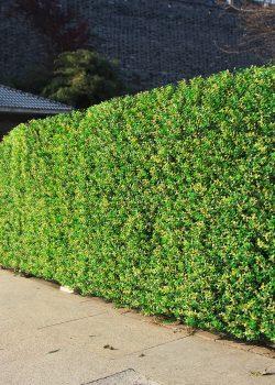Artificial Grass panel-Ellora carpets -img (5)