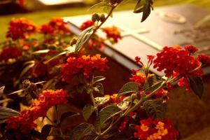 MB Eventi in fiore a Roma è il regno dei fiori e delle piante - Composizioni Funebri 267
