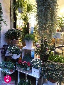 MB Eventi in fiore a Roma - cosa altro puoi trovare da MB Eventi in fiore 02