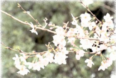 Japan-Image