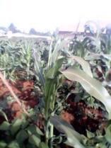 Small crops 1