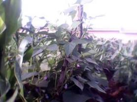 Small crops 2