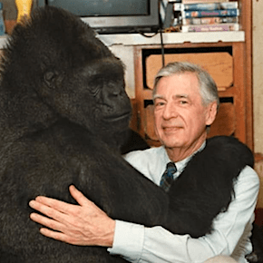 What Happened After Mister Rogers Visited Koko the Gorilla