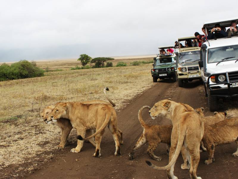 African Safari Vacation Tour Package  Charming Travel