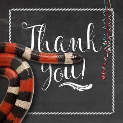 Reptile party thank you card with a red, black, and white striped snake