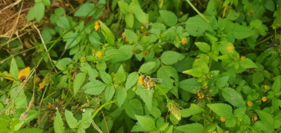 Bee on BlackJack photo