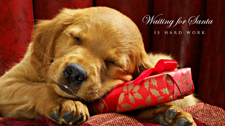 Cute Merry Christmas Wallpaper Dogs Djfdpwsu Michael