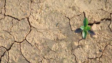 Kesuburan Tanah dan faktor yang mempengaruhinyac