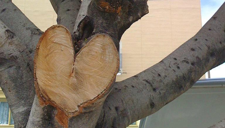 tree of forgiveness