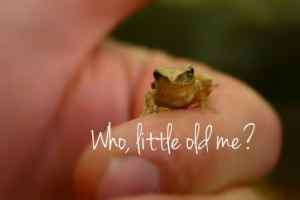 Who, little old me? Small frog on a finger