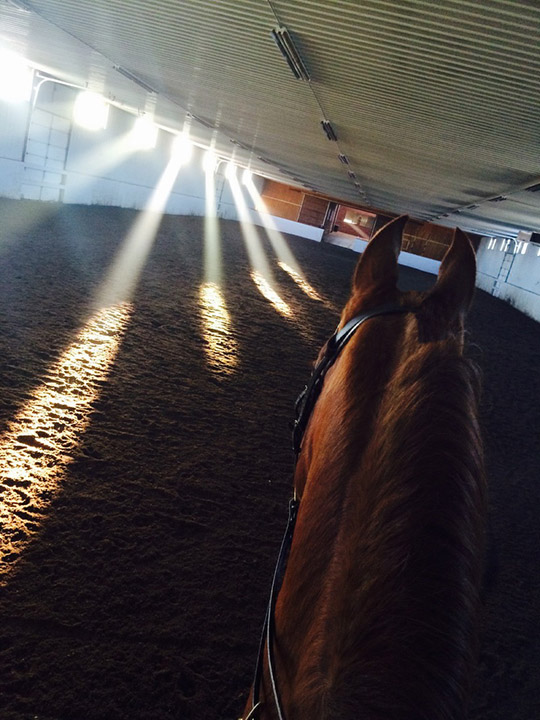 The best view of the indoor arena at Liberty Meadows—from the top of a horse!