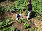 Students working on an agriculture based project.