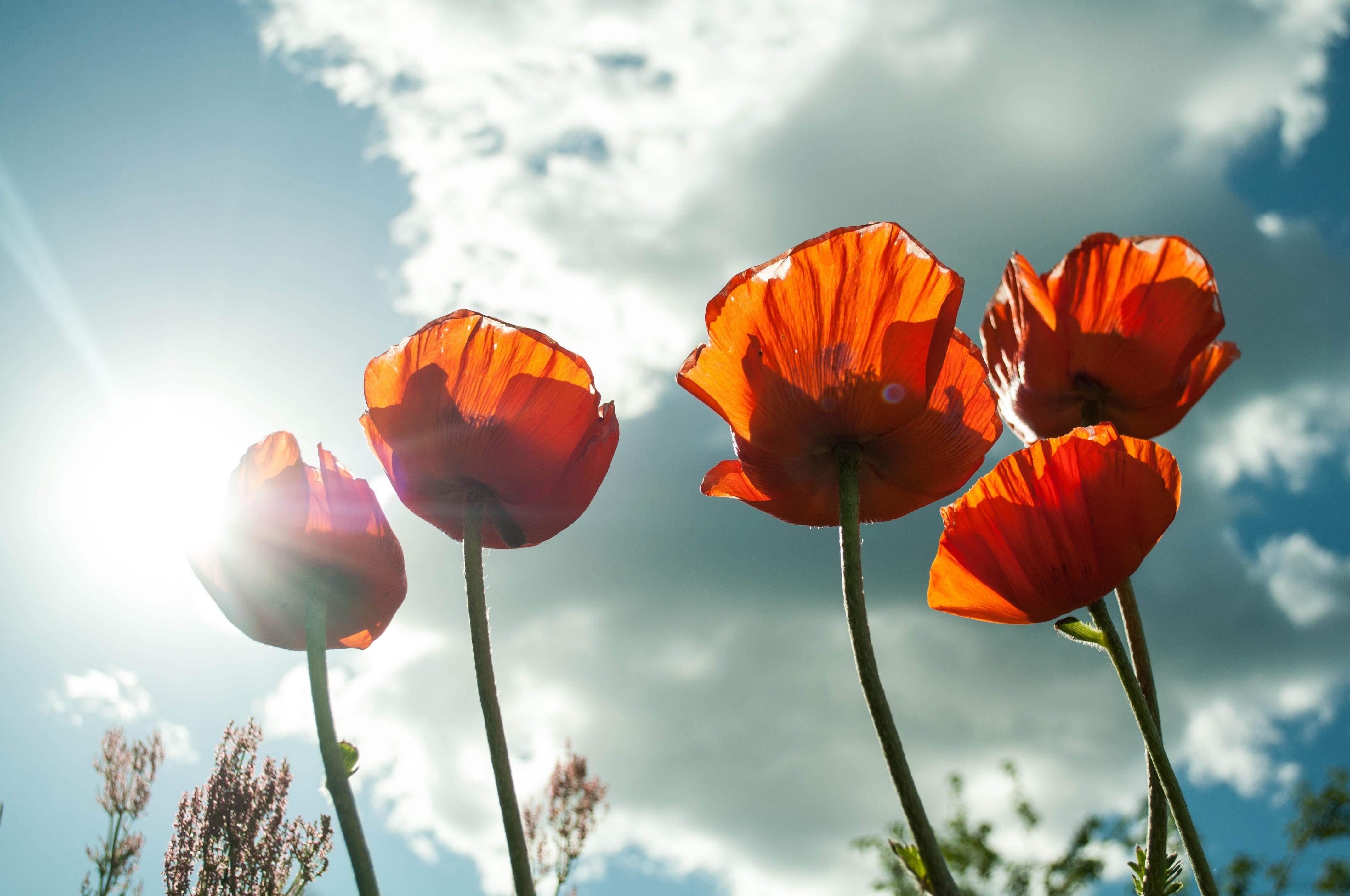 bloom-blossom-flora-53013.jpg