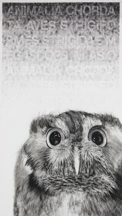 Karen Bondarchuk, My Name is Hubert and I am not an Owl