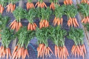 McCollum CSA Carrots