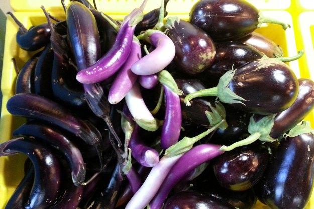 McCollum CSA Eggplant