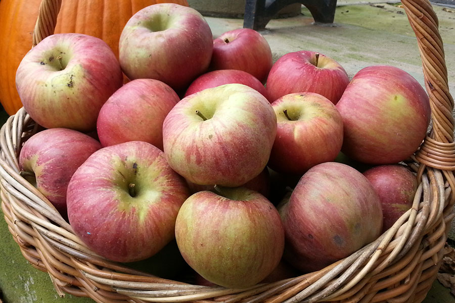 McCollum CSA Apples