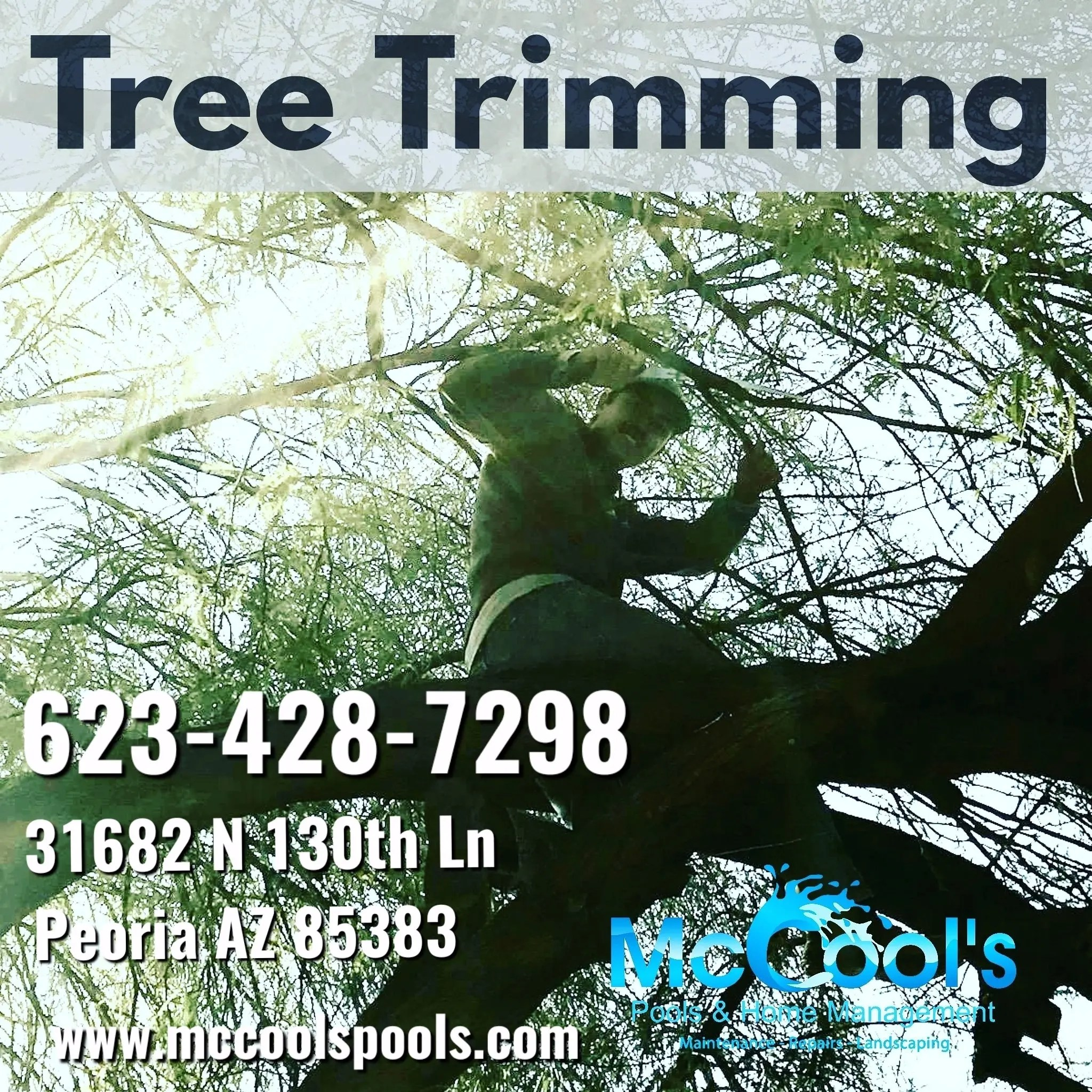 Tree Trimming and Landscaping in Scottsdale Arizona