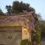 Early Springtime in the garden 2012