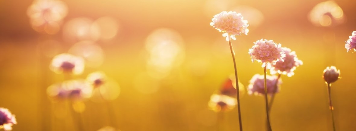 calming flowers in the sunlight, counseling in Montgomery County