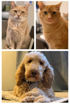 Alex Bleiweis's pets: two cats and one dog.