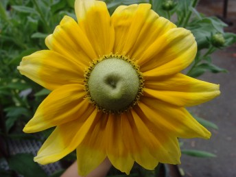 Mc Flower Calendar shots June 19, 2024 12