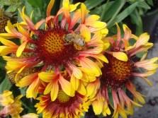 Mc Flower Calendar shots June 19, 2024 7