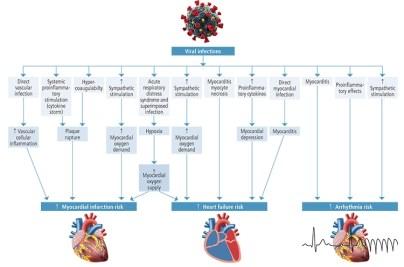 potential-mechanisms_heart7fsh1.png