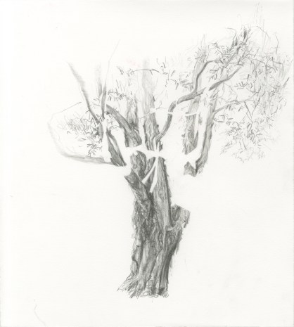westconnex-coutts_tree-20
