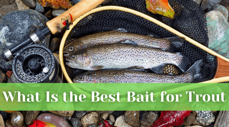 What Is the Best Bait for Trout