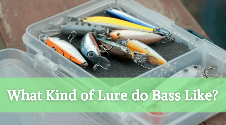 What Kind of Lure do Bass Like