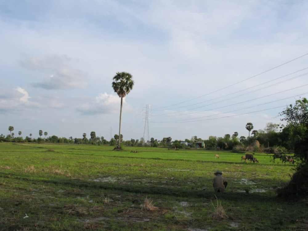 Un champ au Cambodge et son travailleur