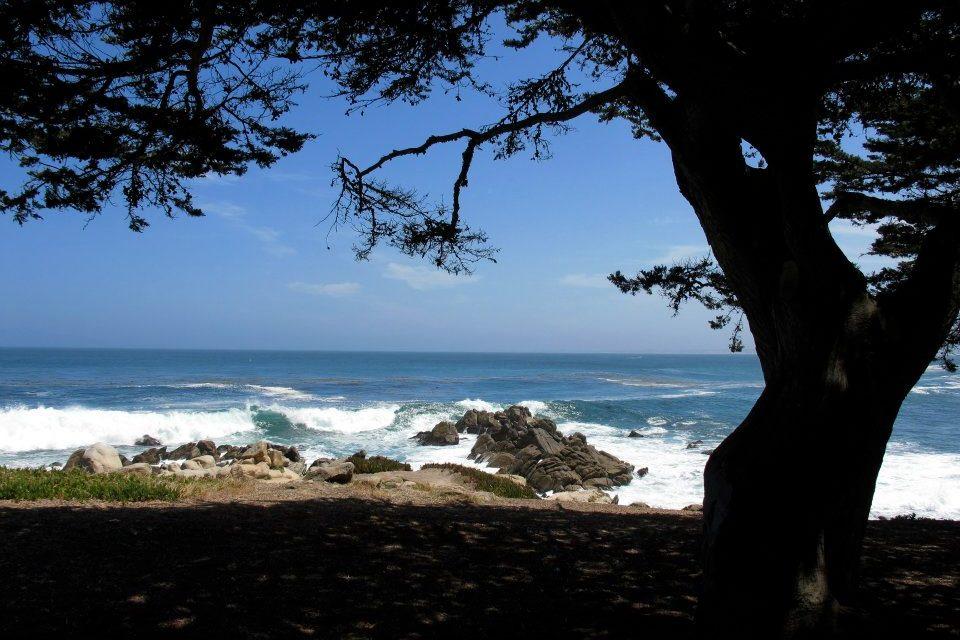 Californie- Pebble beach