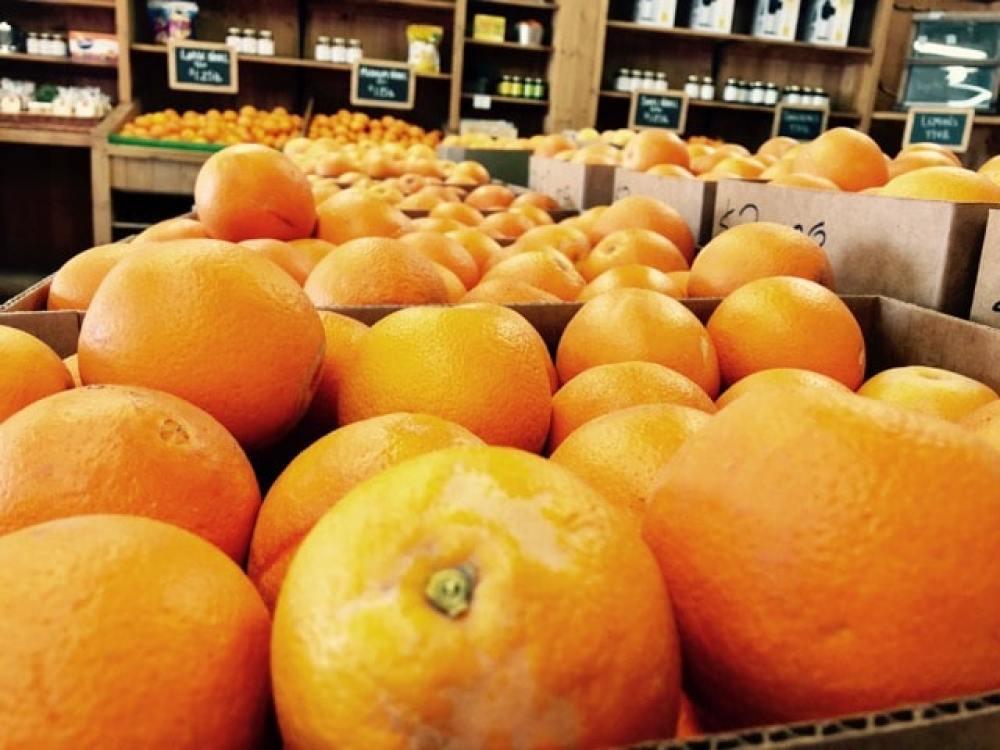 Agrumes et oranges en Arizona