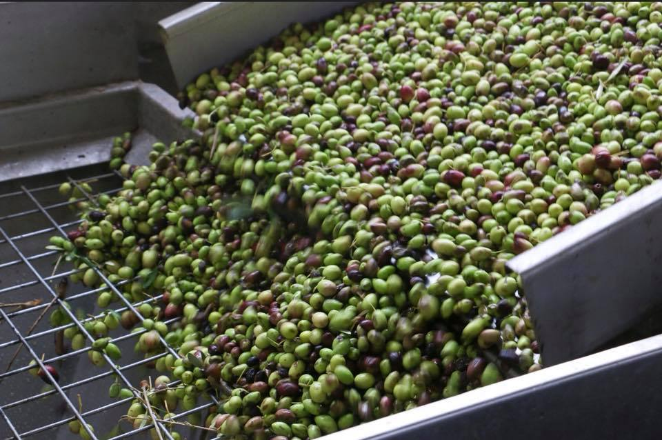 Les olives du Queen Creek Olive Mill sur la Fresh Foodie Trail de Mesa Arizona