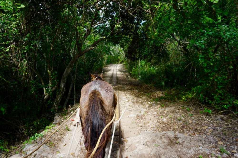 Charrette tirée par une mule pour visiter les 3 cenotes de Cuzama au Mexique