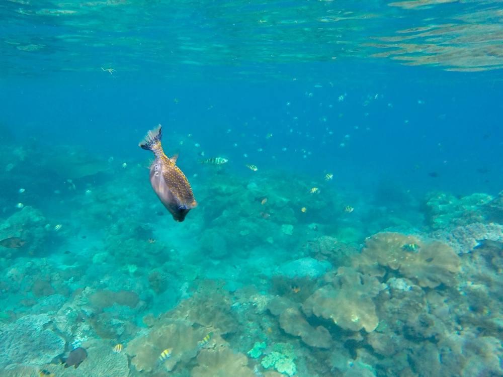 Poissons en plongée en apnée à Nusa Penida, Bali, Indonésie