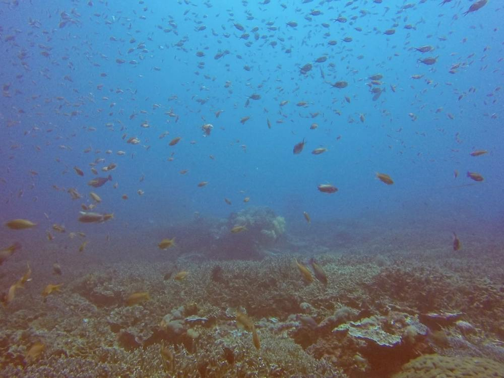 Poissons lors d'une plongée à Nusa Penida Bali Indonésie