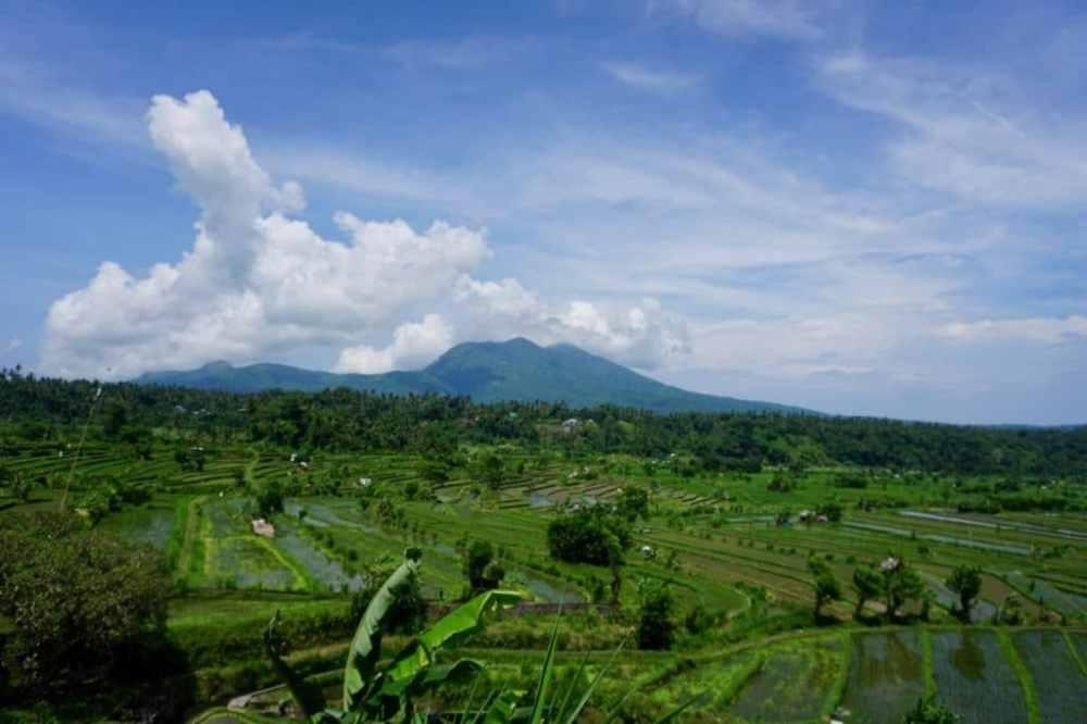 En route vers Amed, de belles rizières, Bali, Indonésie