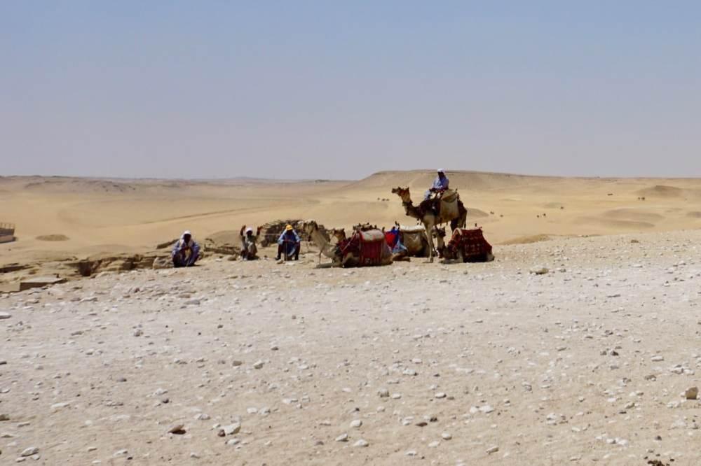 Dromadaires dans le désert près des pyramides, Égypte