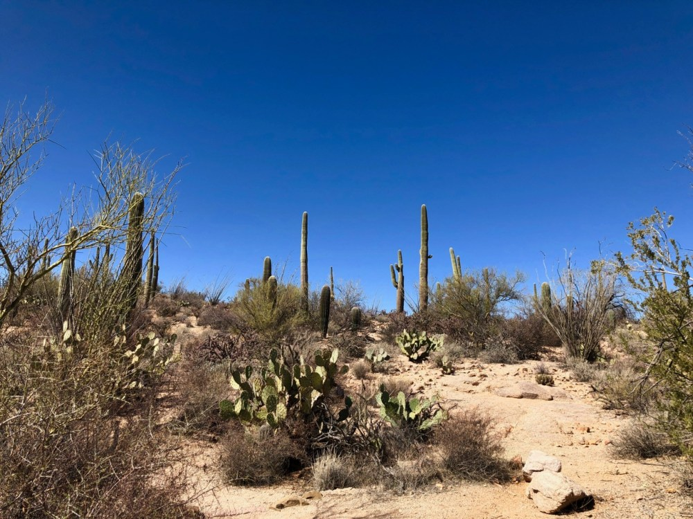 Saguaro National Park près de Tucson Arizona