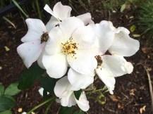 white-cluster-back