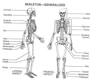 Uncategorized – Anatomy & Physiology Final Project