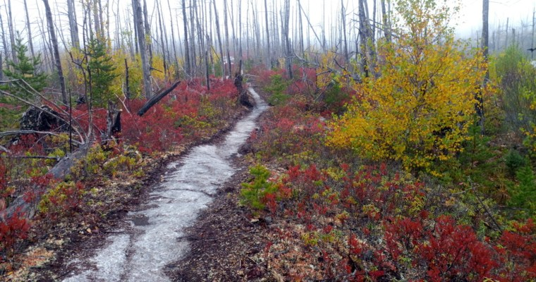 Singletrack 101. Information about the trails.